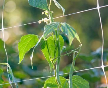 Növényfuttatás a kertben