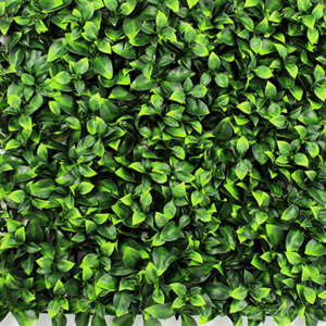 Buxus Panel Babér meggy 50x50cm Zöld