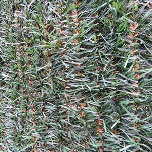 Greenwitch 1,5x3 m zöld/barna műsövény